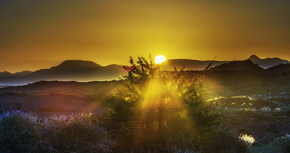 The sun peaks out from behind the skyline as it sets. It casts a warm yellow light over the landscape below- which looks to be a dry mountainous desert. The center of the image has a bush breaking up the light of the sun into distinct rays.