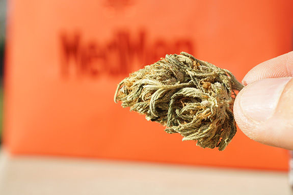 A person's fingers- just barely seen- holds a marijuana bud up to the camera lens with an orange 'MedMen' package seen blurry behind. The cannabis is not very well trimmed up and its buds are mostly hidden by uncut leaves.